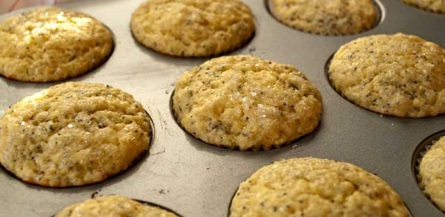 Baked poppy seed muffins
