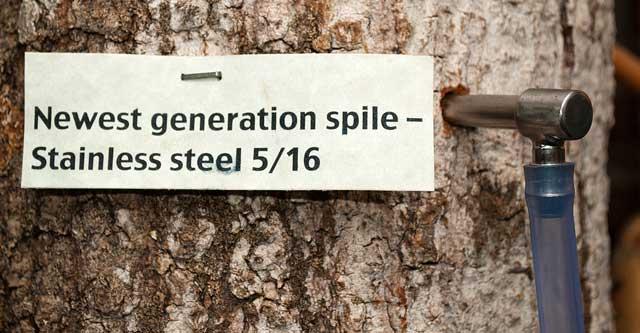 Tree spile