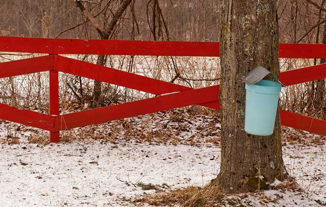 Maple sugaring bucket