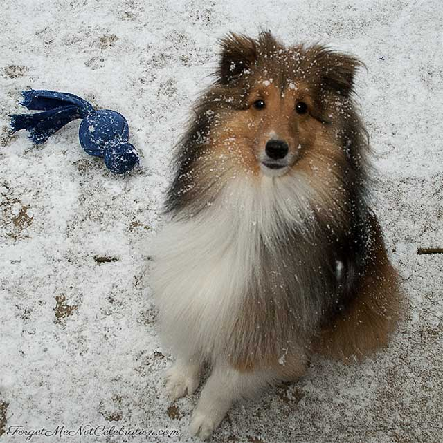 Iagan in the snow